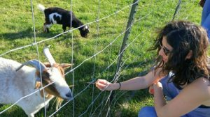 Lab member feeding a goat